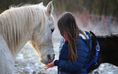 El coaching con caballos como herramienta para reforzar la autoestima